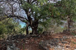 ruin of thornton residence, little jvd, bvi