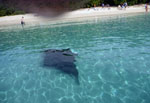 Manta Ray St. John Virgin Islands