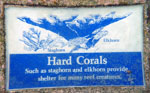 St. John Marine Life: Hard Corals