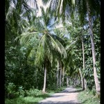 maho palms 1965