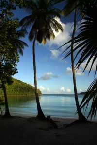 Maho Bay Palms