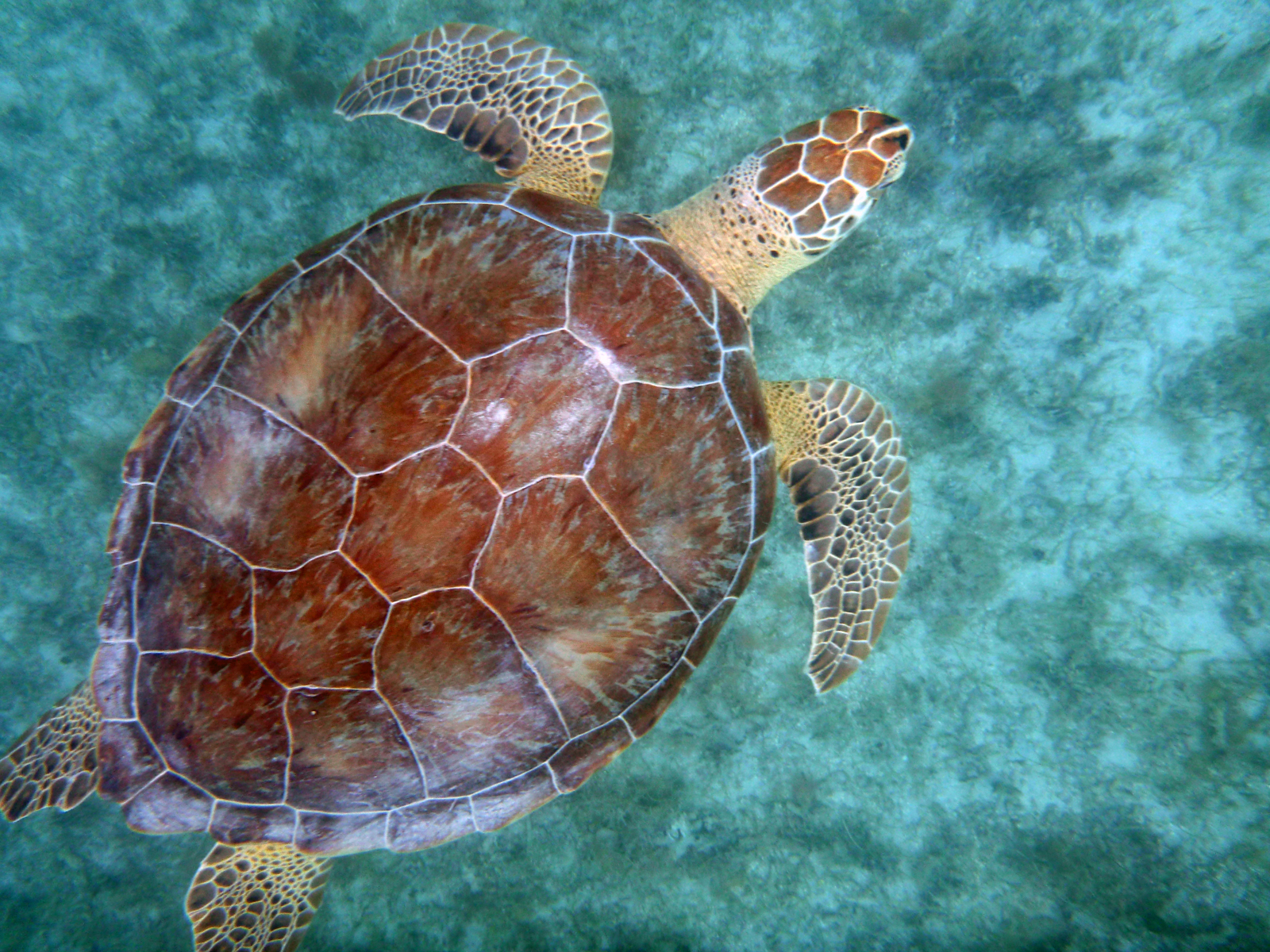 Would you like to observe sea turtles? Check out the grass beds of ...