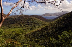 Maria Hope Trail, St. John USVI