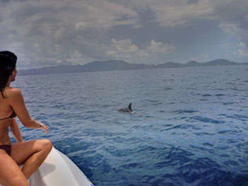 St. John Sea Creatures: Dolphins