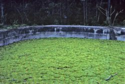 cistern 1978