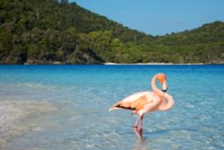 flamingo classic pose jumbie bay