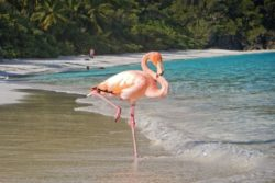 flamingo classic pose and beach