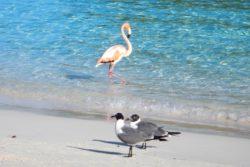 flamingo gulls