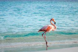 flamingo jvd