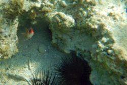 Sqirrel fish face
