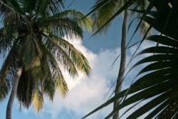 Twin palms Maho bay