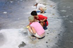 collecting Salt Pond