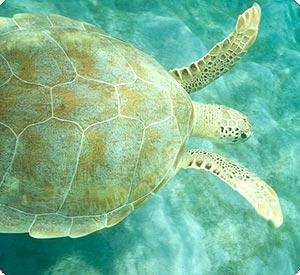 seagrass main