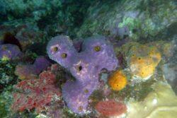 sponges St. John