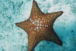 starfish St.John USVI