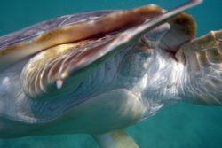 turtle close